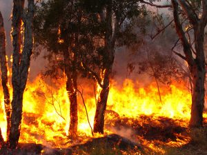 Bushfire Design for the Future