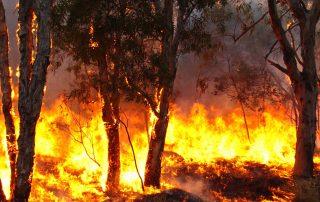 Bushfire Design for the Future